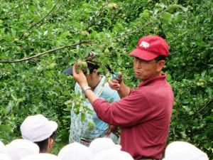 6月28日 3年生リンゴ栽培体験